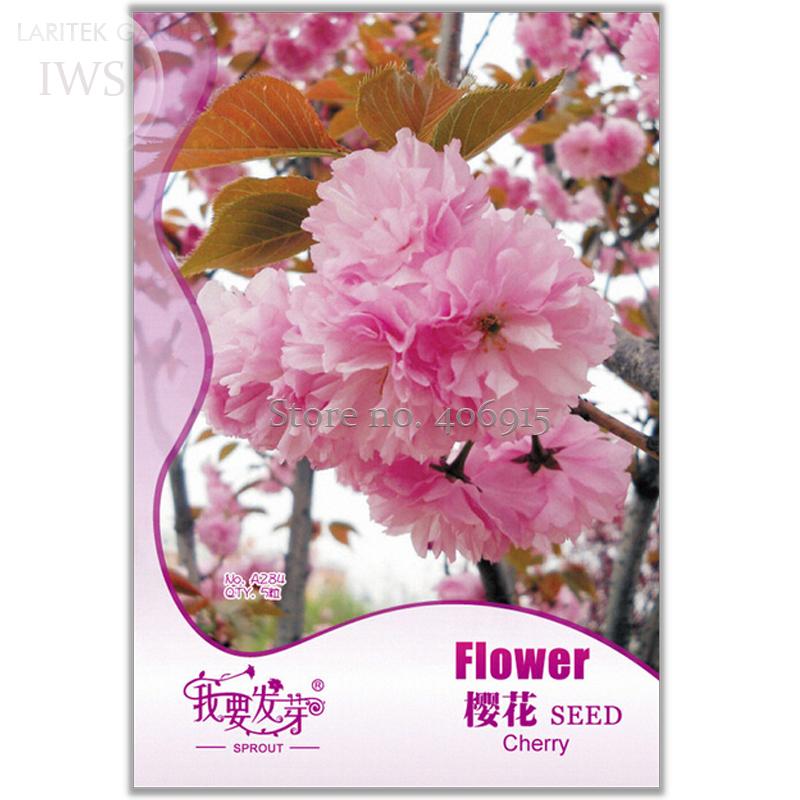 Perennial Plant Japanese Cherry Trees Potted Bonsai Seeds, Original Pack, 5 seeds, ornamental light up your garden IWSA284(China (Mainland))
