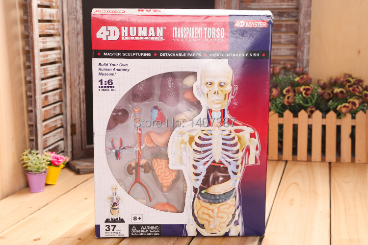 New arrival 4D human body structure medical science models(China (Mainland))