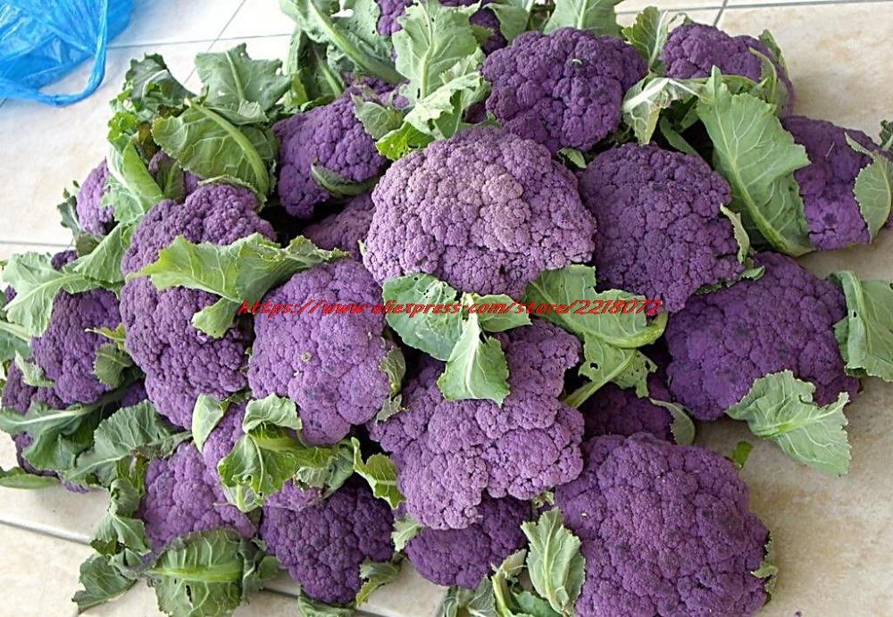 Фиолетовая цветная капуста выращивание 62