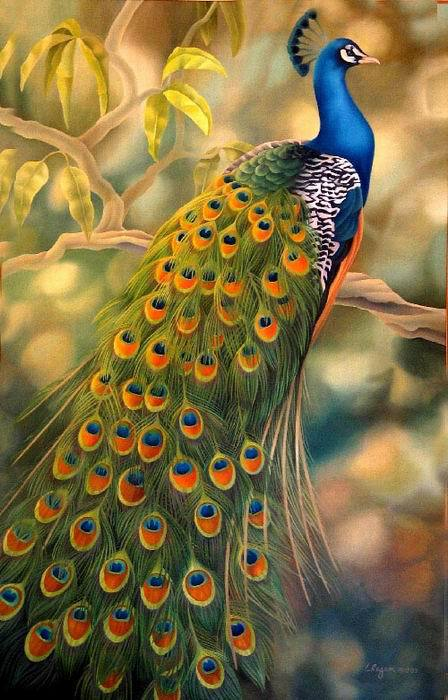 Hand painted oil painting beautiful peacock decorative oil for Easy peacock paintings