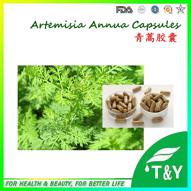 100% Natural Herbal Artemisia annua extract Capsule, 500mg*400pcs/Bag with best quality<br><br>Aliexpress