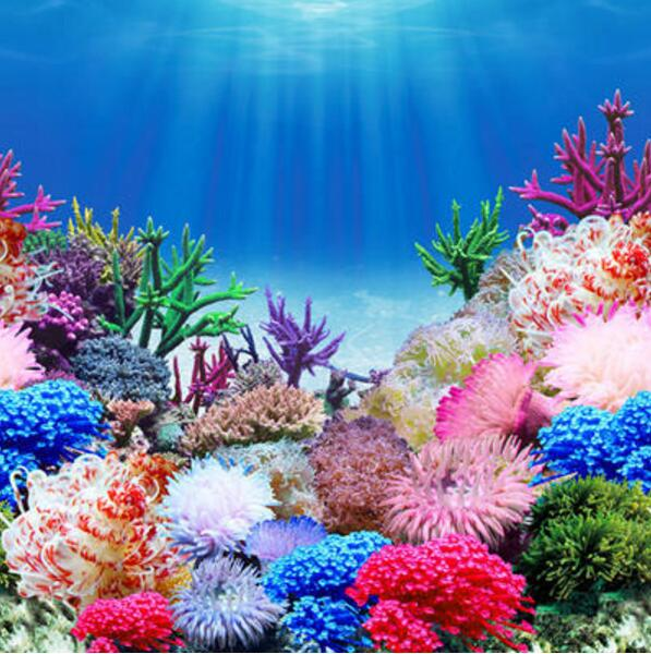 9099 19 3 x 48 double sided fish tank background