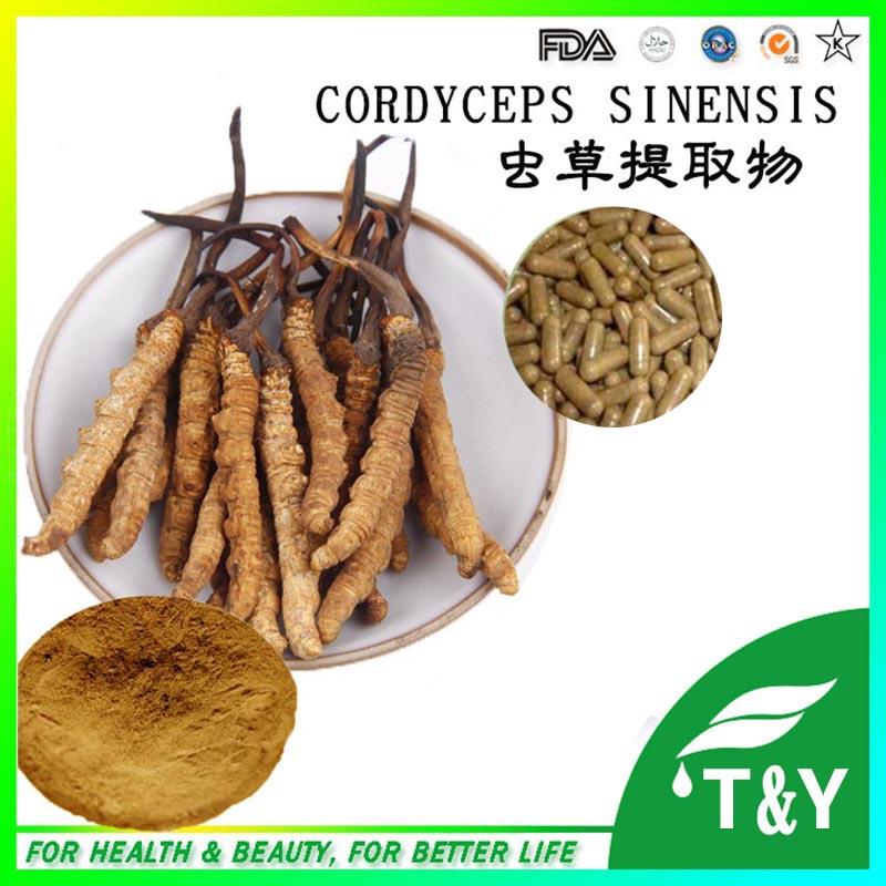 Best health product Cordyceps Sinensis extract40%/Cordyceps polysaccharide  500mg*700pcs<br><br>Aliexpress