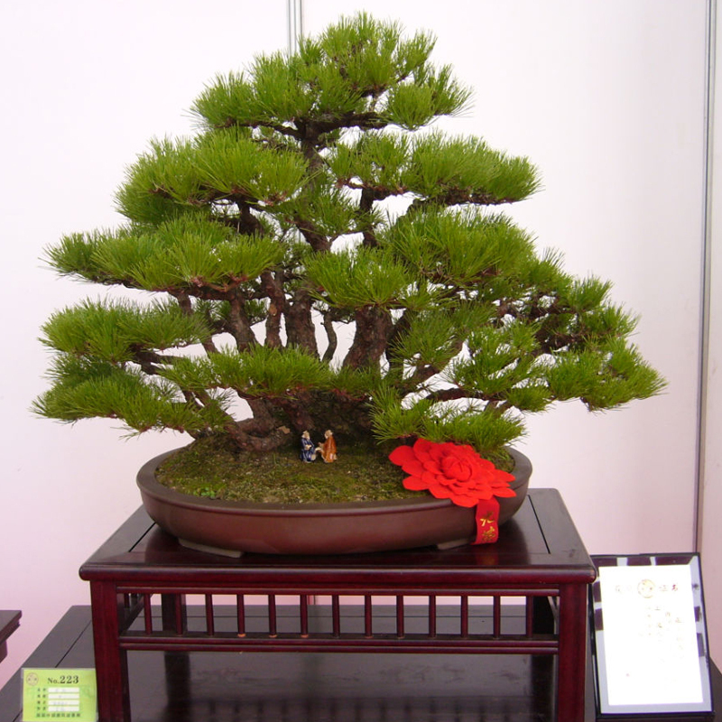 Image Gallery Japanese Potted Plants