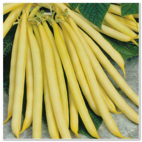 vegetable seeds organic: