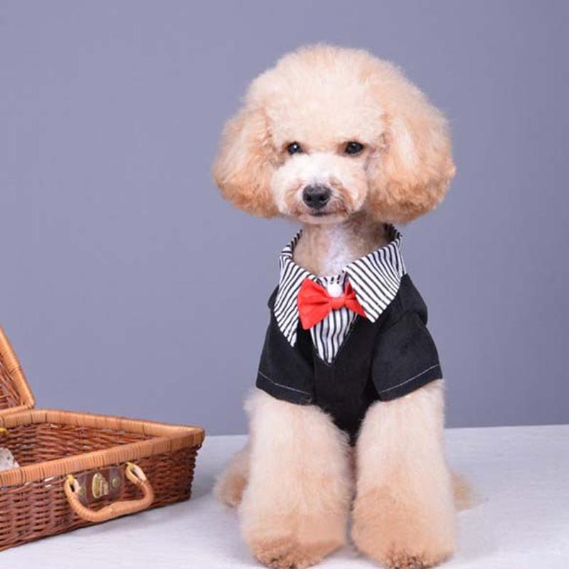 2015 New fashion Spring Autumn Winter puppy Dogs C...