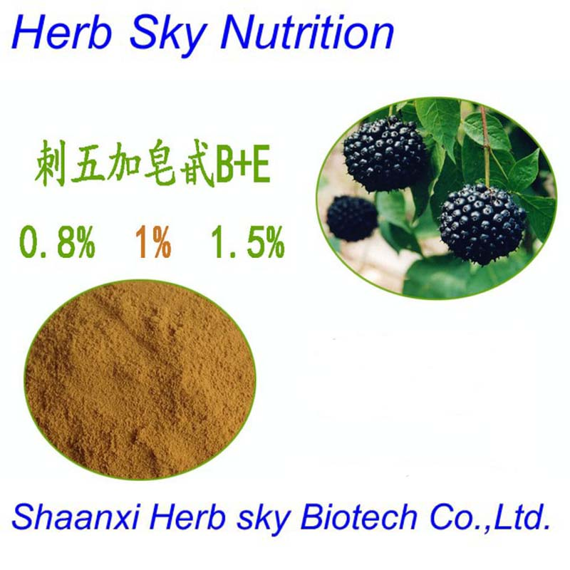Medicine in china Siberian Ginseng extract/Acanthopanax senticosus powder 500g/lot