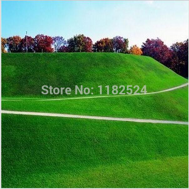 Free Shipping 2000pcs High Quality Lawn Grass Seeds(China (Mainland))