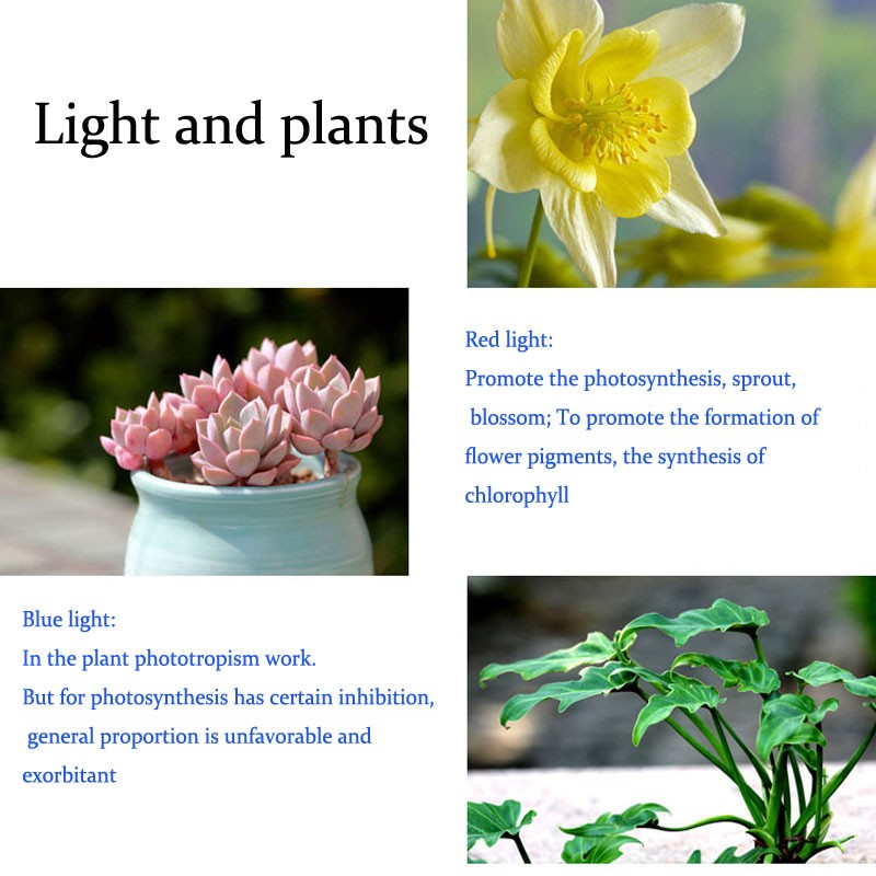 influence of light on plant growth