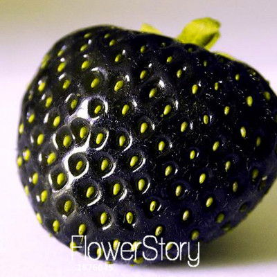 Promotion!100 PCS/Lot Fruit Seeds Black Strawberry Seeds Bonsai Plants For Home & Garden Pot Garden Strawberries,#W4EPLL(China (Mainland))