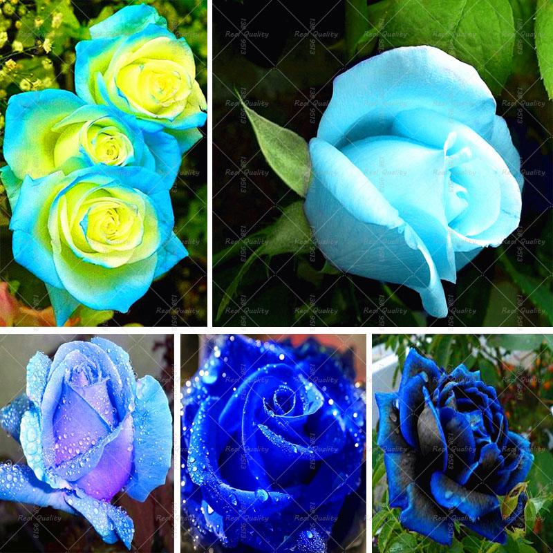 Значение подаренных цветов