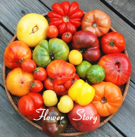 200 Mixed Tomato Seeds, Organic Heirloom ,hardy ,heat resistant , rich flavor by flower story, free shipping(China (Mainland))