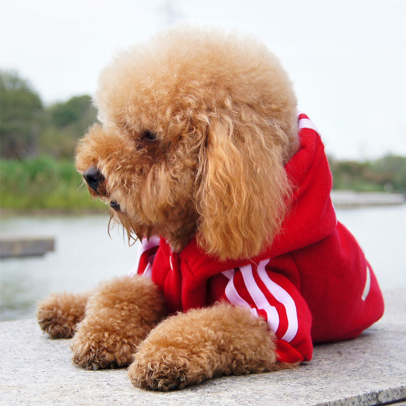 Fashion Cotton Small Sweater Pet Sports Costumes Autumn Dog Clothes Fleece Jacket Hoodie Provide Products For Dogs S M L XL XXL(China (Mainland))
