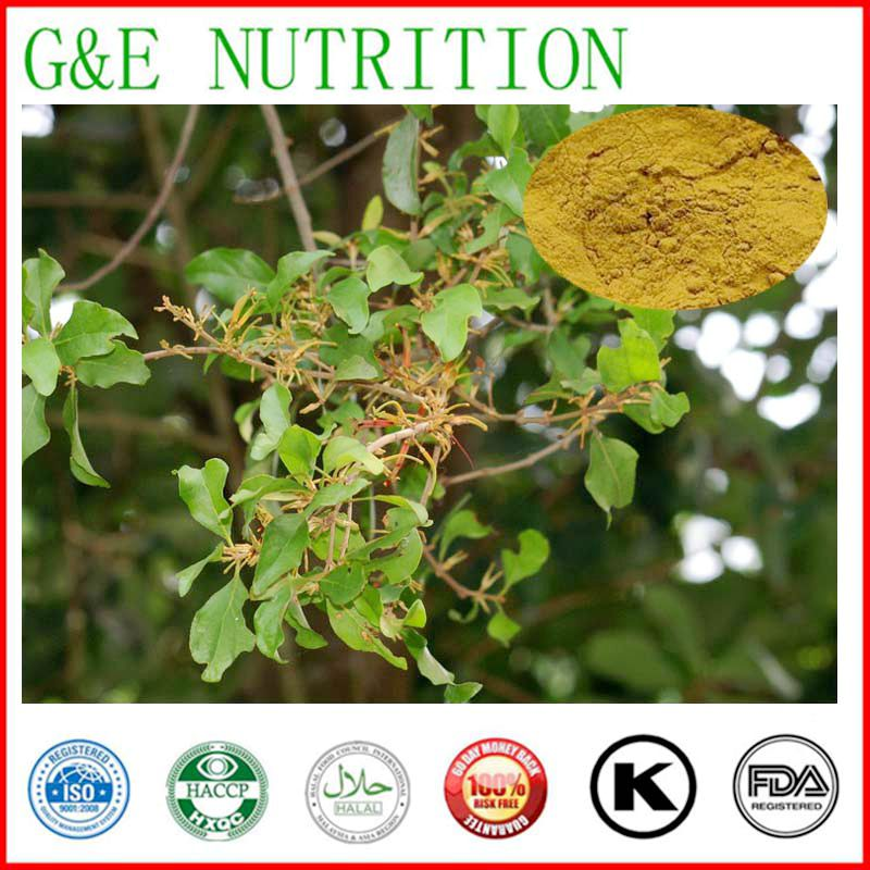 Top Quality Natural Chinese Taxillus Twing Extract 20:1<br><br>Aliexpress