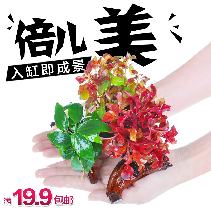 Lazy Crazy landscaping plants plants Shen wood landscaping Moss aquatic plants landscaping ADA mud driftwood Package(China (Mainland))