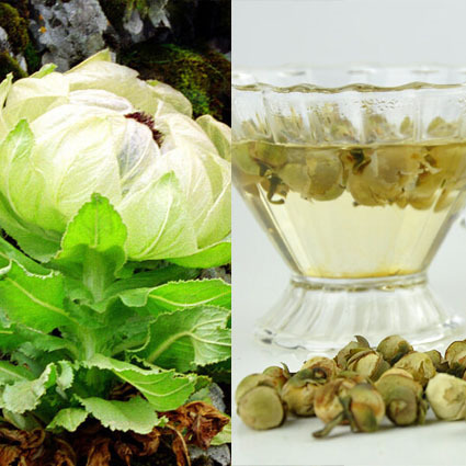 Гаджет  2015 Dried Organic Snow Lotus Blossom Flower Tea, Xinjiang Tianshan Natural health care blooming scented herbs 20g free Shipping None Еда