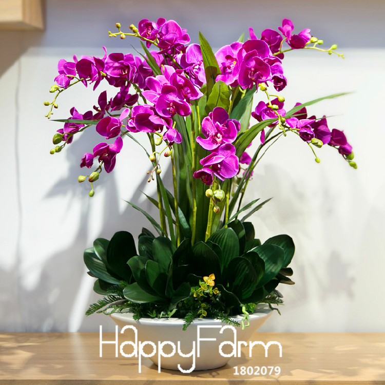 New Arrival!200 PCS/Lot Purple Butterfly Orchid Flower Seeds Potted Seed Germination Rate 95% DIY Flower Plants,#GND9KU(China (Mainland))