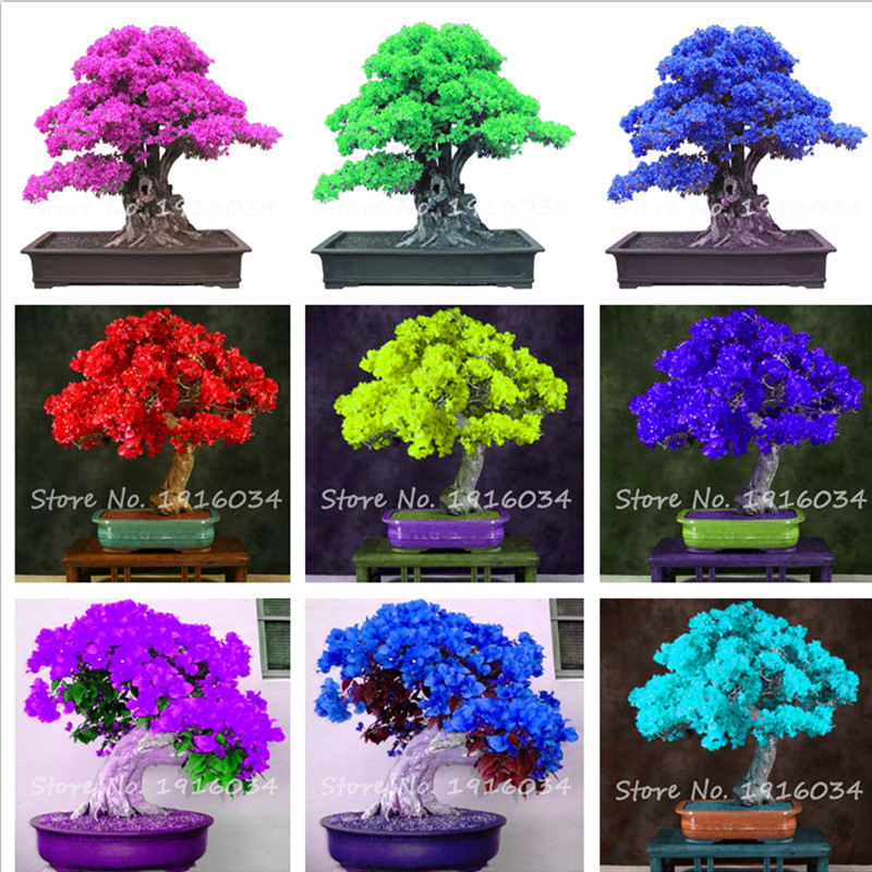 9 Kinds of colour Bougainvillea Spectabilis Willd Can Be Choose Perennial Bonsai Plant Flower Bougainvillea Seeds 50 pcs(China (Mainland))
