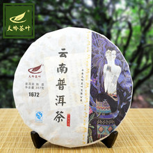 Free shipping Pu 'er tea six big ancient tea mountain old trees ecological special brand promotion tea puer milk oolong