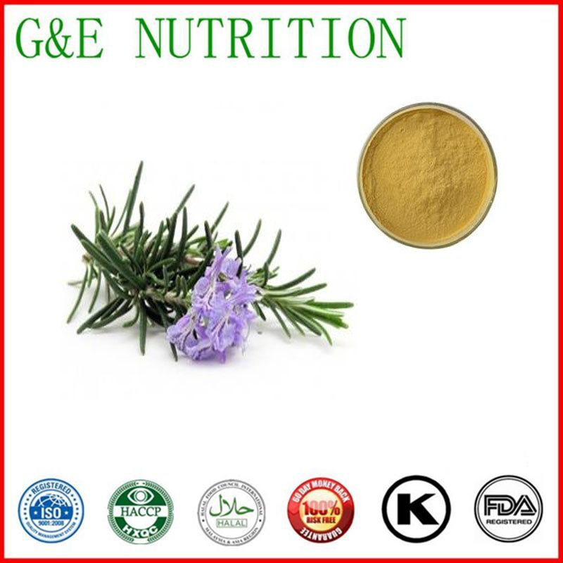 500g Natural Rosemary/ Romarin/ Rosmarinus officinalis Extract with free shipping<br><br>Aliexpress