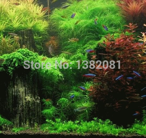 Hot (1000) Seeds (18 kinds) of aquarium grass seeds (hybrid) family of aquatic plants is very easy to plant seeds free shipping(China (Mainland))