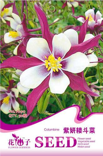 50 Purple Columbine Flower Seeds Indoor Hummingbirds Butterflies diy home garden Free Shipping A190(China (Mainland))