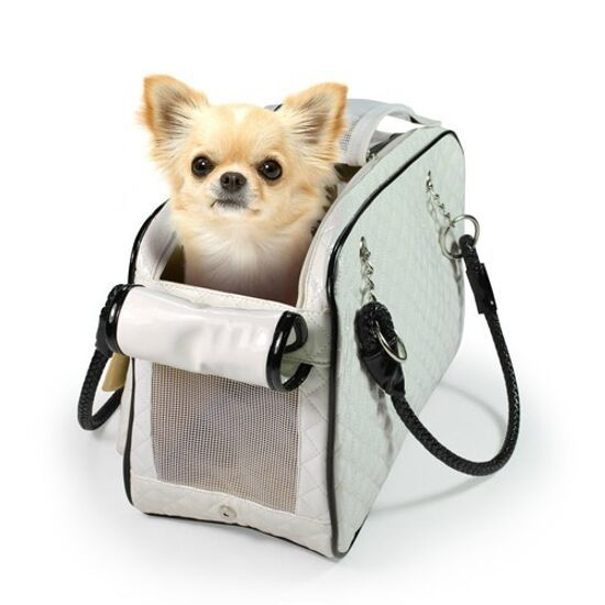 Chihuahua Carrying Cat Pictures To Pin On Pinterest