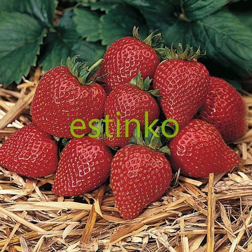 100pcs/lot Bonsai Strawberry Seeds Delicious Fruit Strawberry Sarian Four Seasons Planting Fruit Seeds Bonsai Plant Home Garden(China (Mainland))