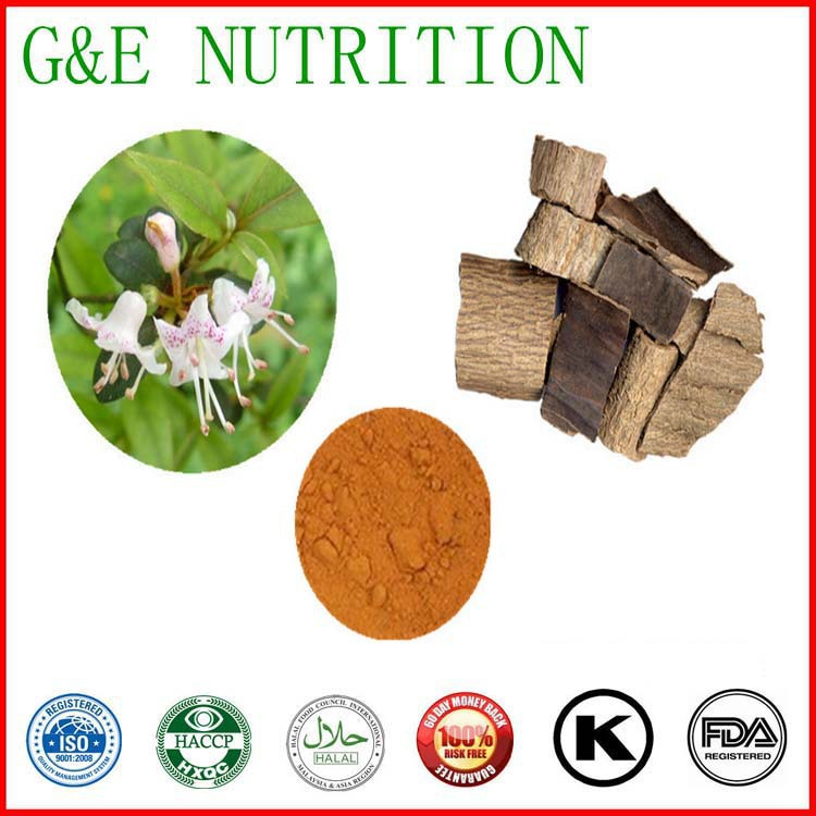Lowering blood pressure remedy Eucommia Ulmoides Extract /20% Chlorogenic Acid