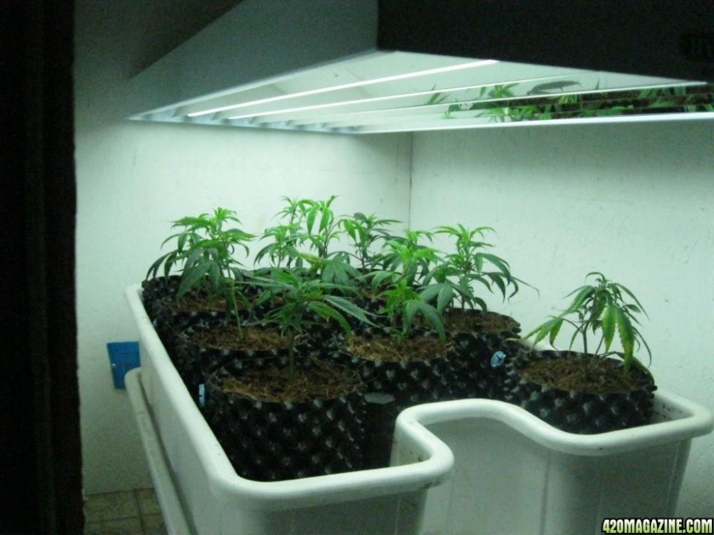 Fluorescent 24W*4 T5 Grow Light  Fixture
