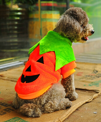 Halloween Pumpkin Design Pet Dog Teddy Bichon Frise Pomeranian Winter Party Clothes Suit Soft Warm Coral Velvet Free Shipping(China (Mainland))