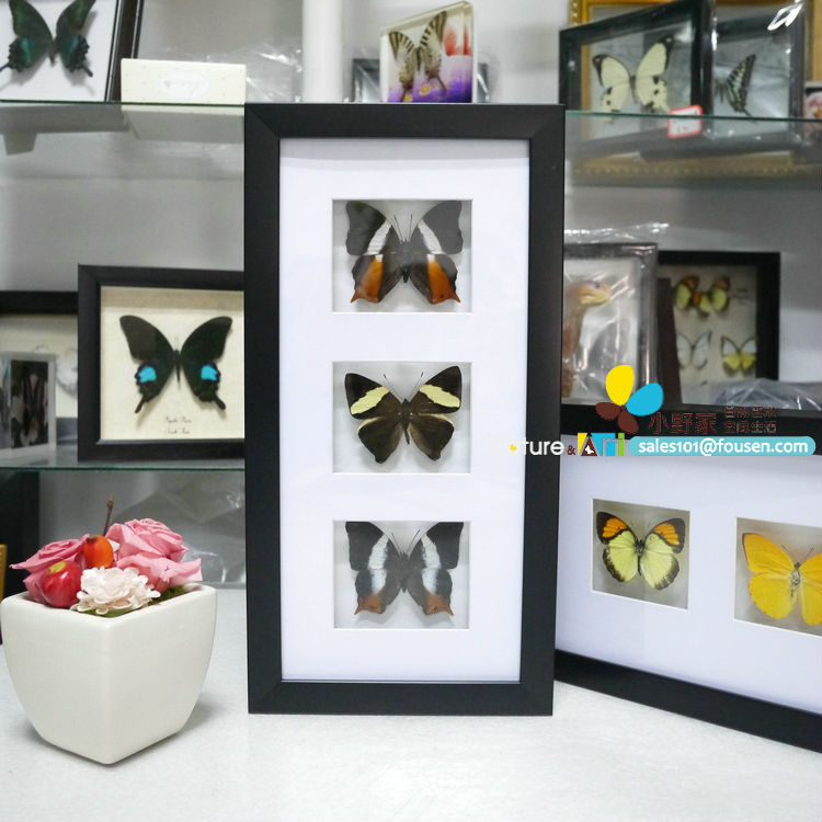 FOUSEN(023) Preserved butterfly, insects, flowers and seashells PS shadow box framed naturals(China (Mainland))