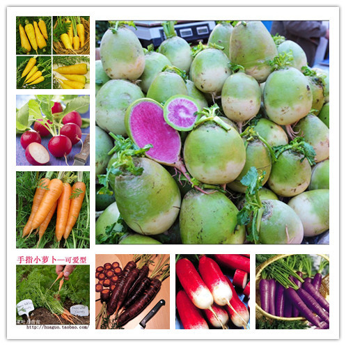 100pcs/bag many kinds radish carrot seeds seeds vegetables for home& garden case e jardim with a free gift(China (Mainland))