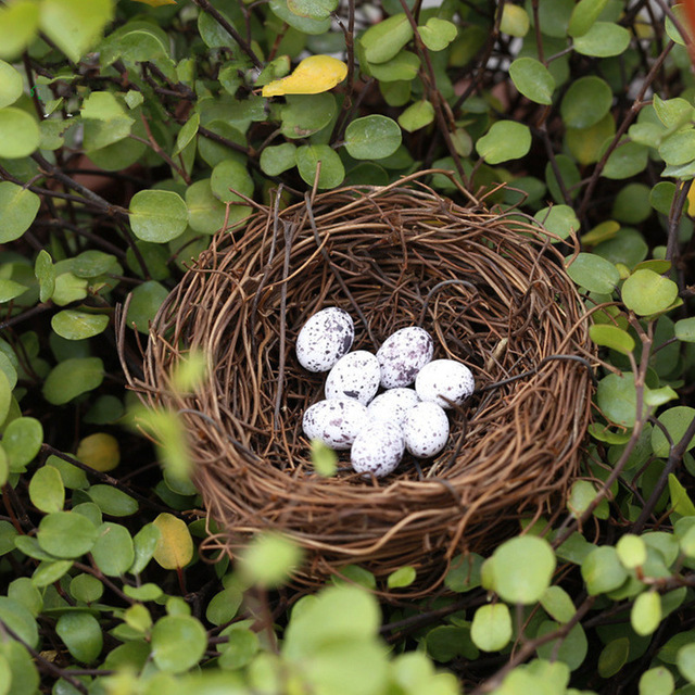 Real Bird Nest Vintage Decoration Prop 100% Bird Cage Creative Marriage Proposal Wedding Photography Props(China (Mainland))