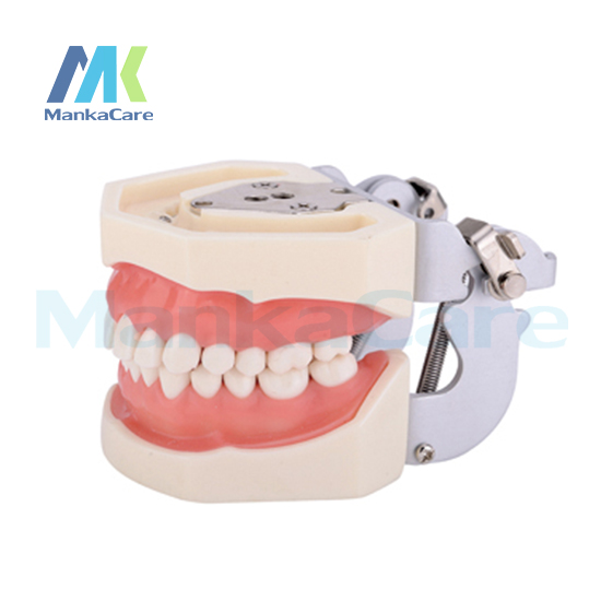 Фотография Manka Care - Standard Model/28pcsTooth/Soft Gum/Screw fixed/FE Articulator Oral Model Teeth Tooth Model