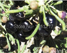 2015 new arrival 200g Black Wolfberry Fruit Organic Medlar Healthy Berries Pure Goji Berry Best Food
