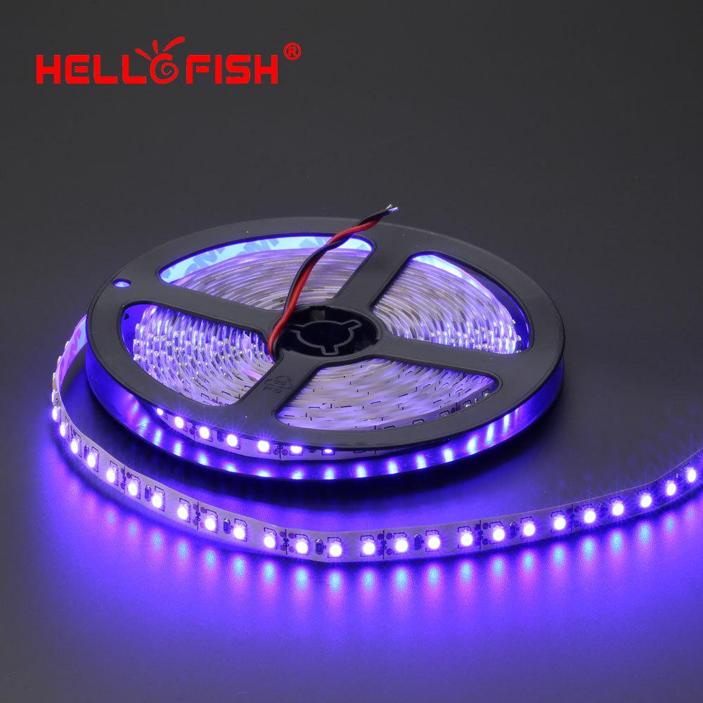 Flexible Led Light Strip 3528 Smd 12 Volt Quality Lighting: Hello Fish 5m 600 LED Tape, 3528 SMD 12V Flexible LED