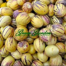Buy 15pcs/lot Rare Seeds Melon Pepion (Solanium Muricata) Organic Heirloom Vegetable Seed bonsai plant real seeds Free for $1.47 in AliExpress store