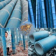 40 pcs/bag rare blue bamboo seeds, decorative garden, herb planter bambu tree seeds for diy home garden send gift(China (Mainland))
