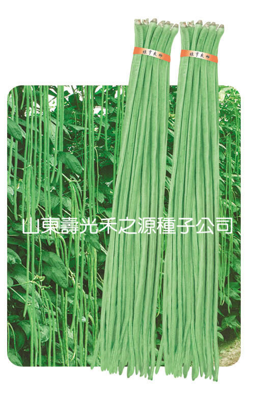 20 seeds/pack Cowpea seeds spring and autumn 1 - 1.2 meters magic beans seeds growing messages(China (Mainland))