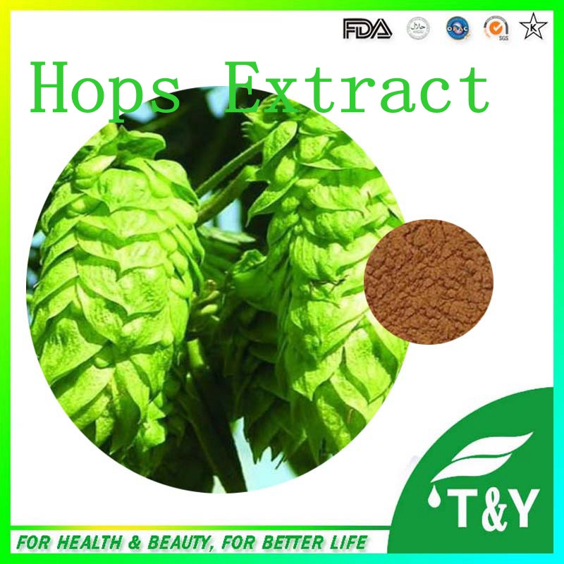high quality humulus lupulus powder 100% natural hops flower extract