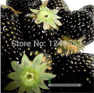 Promotion!!! 600 pcs/ 24 kinds strawberry seeds green black blue orange white red pink + rose seeds for gifts, Bonsai, DIY(China (Mainland))