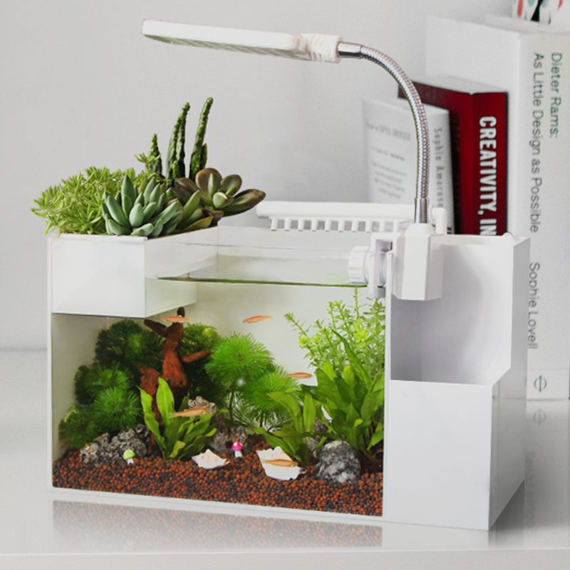 Creative ecologies amphibious tank aquarium landscaping for Cheap small fish tanks