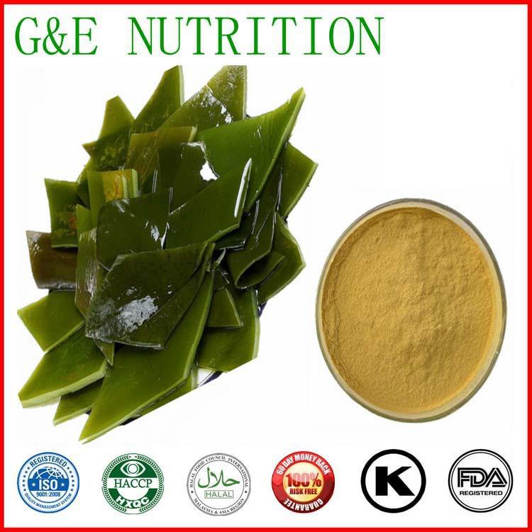 Hot Selling Fucoidan 30% Kelp Extract Seaweed Extract