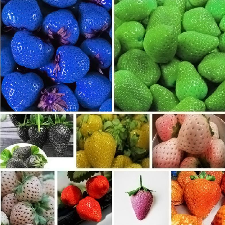 9 kinds 500PCS strawberry seeds Rare Fragrant Sweet Juicy fruit seeds potted plants home garden supplies(China (Mainland))