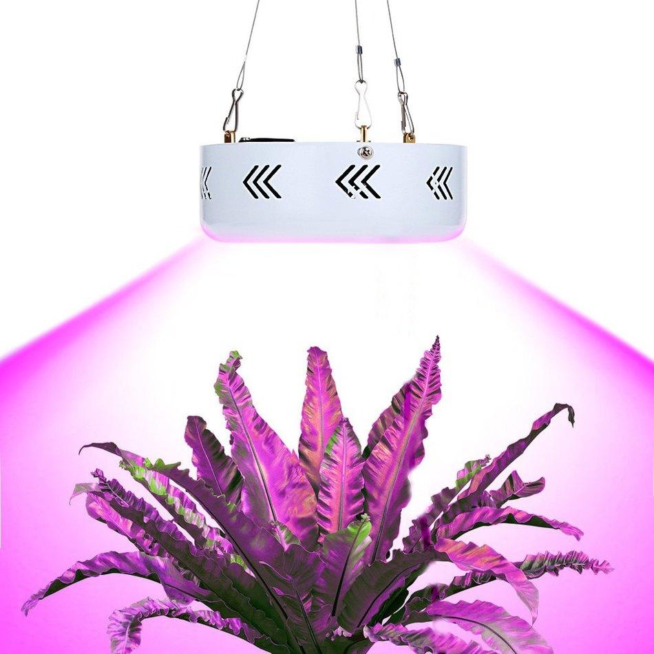 какое расстояние должно быть фитолампы для растений