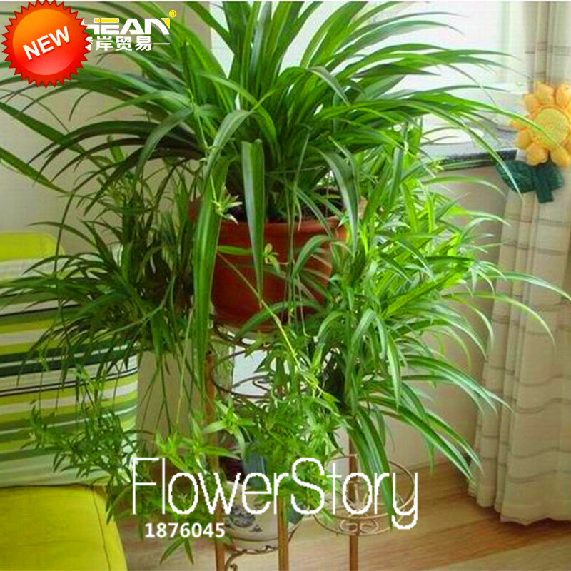 Pin Indoor Plants Including Office And House For Sale