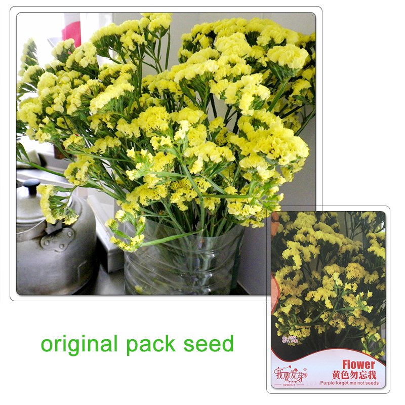 Original Pack 35 Seeds / Pack Yellow Forget Me Not Seeds Limonium Sinuatum Sea Lavender Balcony Flowers(China (Mainland))