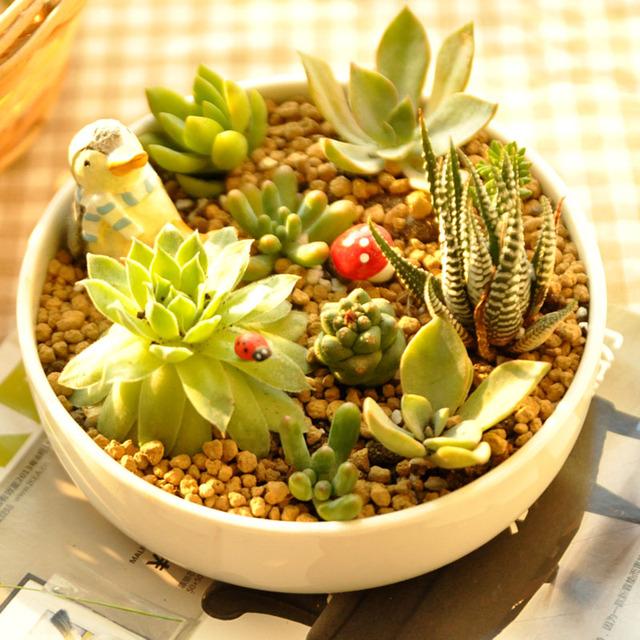 Livraison gratuite, Charnues fleur plante pot fleurs style ...