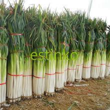 Buy Shangdong Zhangqiu Giant Chinese Green Onion Seeds Vegetable Seeds Home Garden Bonsai Plant Chinese Vegetable Seed Free for $1.86 in AliExpress store